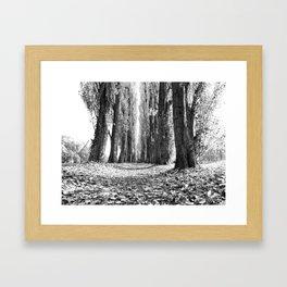 Poplar Avenue Framed Art Print