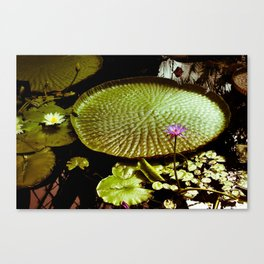 Life Upon A Lily Pad Canvas Print
