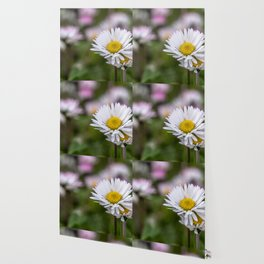 Colourful daisy field close up Wallpaper