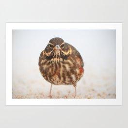Chilly Bird Art Print