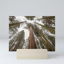 Sequoia Stretch - Nature Photography Mini Art Print