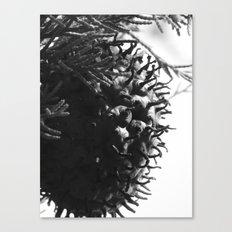 strange fungus 2017 Canvas Print