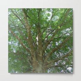 Wise Old Tree Too Metal Print