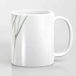 Witsenia maura  from Les liliacees (1805) by Pierre Joseph Redoute (1759-1840) Coffee Mug