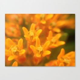 Flower friends Canvas Print