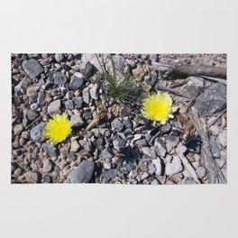 Dandelion's Survival in the Desert Rug