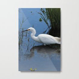 Snowy Egret Near Shore Metal Print