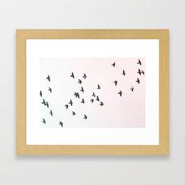 Birds Flying Print Framed Art Print