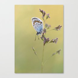 Silver Studded Butterfly Canvas Print