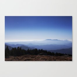Life Above the Trees Canvas Print