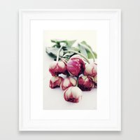 tulips Framed Art Prints featuring Tulips by Sirka H.