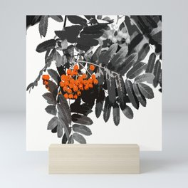 Red Rowan Berries In Black And White Background #decor #society6 Mini Art Print