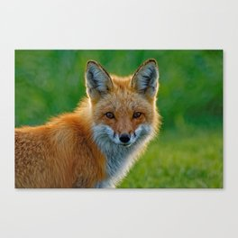 Red Fox Backlit Canvas Print