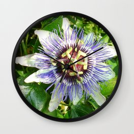 Passiflora Against Green Foliage In A Garden  Wall Clock
