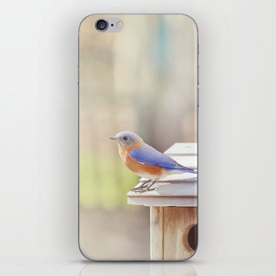 Bluebird Morning iPhone Skin
