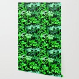 Clover Stay Wallpaper