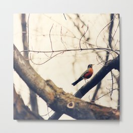 Robin Red Breast bird sitting on a branch  Metal Print