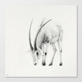 Oryx dammah / Scimitar Horned Oryx Canvas Print