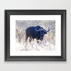 Water buffalo Framed Art Print