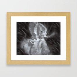 Delicate Iris Framed Art Print