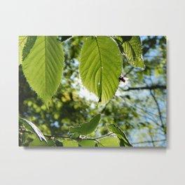 Sunlight Canopy III Metal Print