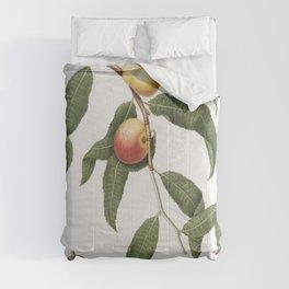 Peach (Persica Alberges) from Pomona Italiana (1817 - 1839) by Giorgio Gallesio (1772-1839) Comforters