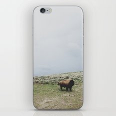 Hillside Bison iPhone & iPod Skin