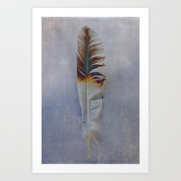 FEATHER PHOTOGRAPHY, FEATHER NATURE PHOTO WALL ART, BIRD FEATHER - GREY TONES Art Print