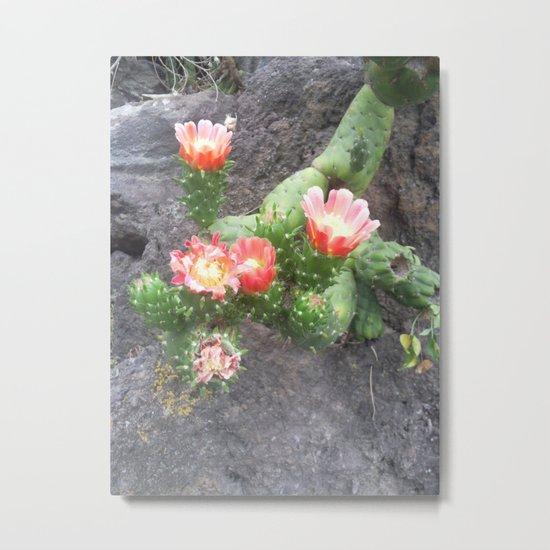 A cactus in its bloom Metal Print