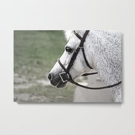 Fleabit Gray Pony Metal Print