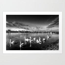 Sunset Swans Art Print