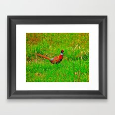 Ringneck Framed Art Print