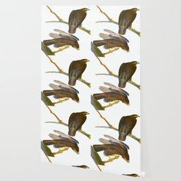 Black Warrior John James Audubon Vintage Scientific Hand Drawn Illustration Birds Wallpaper