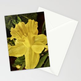 Daffodil at Barthel's Farm Market Stationery Cards