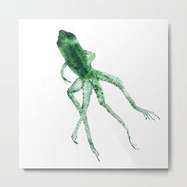 Study of a frog #01 Metal Print