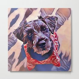 The Schnoodle - A Schnauzer Poodle Mix Breed Metal Print