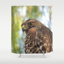 Young Red-Shouldered Hawk in a Desert Willow Shower Curtain
