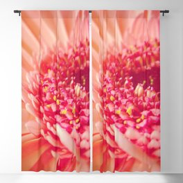 Pink Germini Close up 4 Blackout Curtain