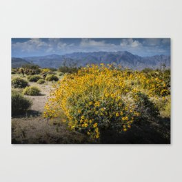 Wild Desert Flowers Blooming in the Anza-Borrego Desert State Park, Southern California Canvas Print