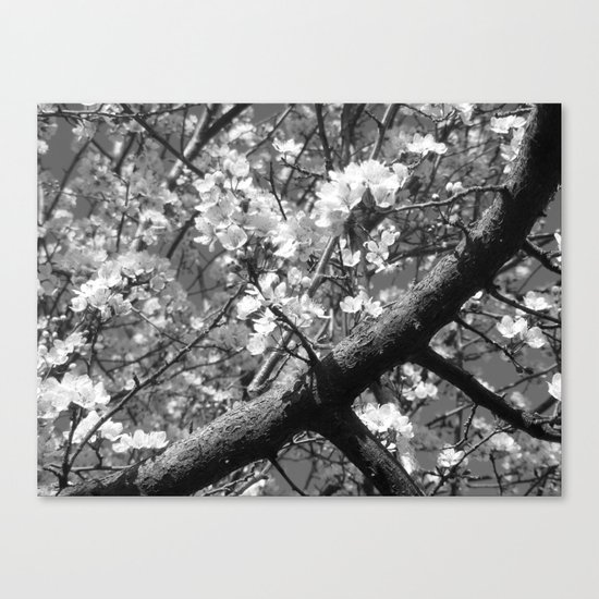 Places in Black & White: Plum Tree 5 Canvas Print