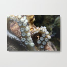 Tentacles of octopus close up Metal Print