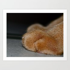 Take a Paws Art Print