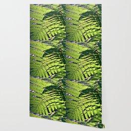 Green Fern in Sunny Dreams Wallpaper