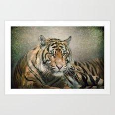 Tiger looking Art Print