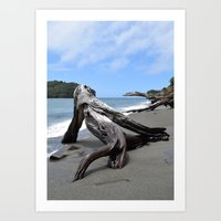 New Zealand Summer, Goat Island Art Print