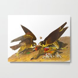 Great-footed Hawk Metal Print