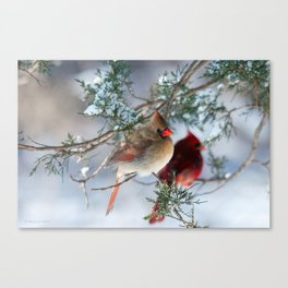 Shining on Her Own (Cardinal) Canvas Print
