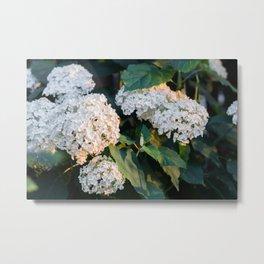Flowers in the sun Metal Print