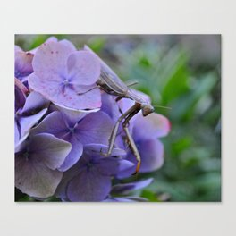 Little Mantis Canvas Print