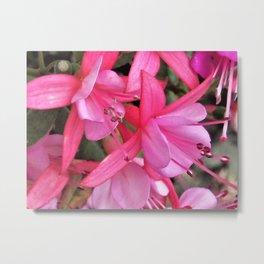Little Pink Fuchia Metal Print